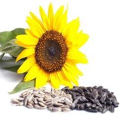 Семена подсолнечника, Адванта, Хайсан 158 ИT, под евролайтинг (Hysun 158 IT)