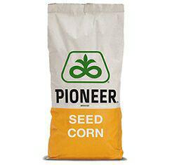 купить Семена кукурузы, Pioneer, P8816, ФАО 300
