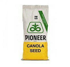 Семена рапса Pioneer PT264