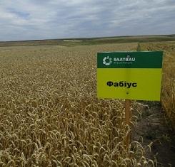купить Озимая пшеница ФАБИУС, Saatbau, 1 Репродукция
