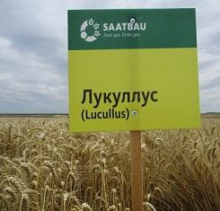 купить Озимая пшеница ЛУКУЛЛУС, Saatbau, 1 Репродукция