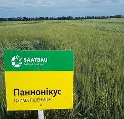 купить Озимая пшеница ПАННОНИКУС, Saatbau, 1 Репродукция