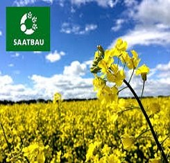 Семена рапса, Заатбау, Рекорди (Saatbau, Recordie)