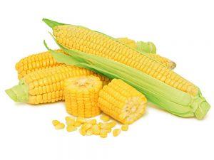 купить семена посевной кукурузы Монсанто