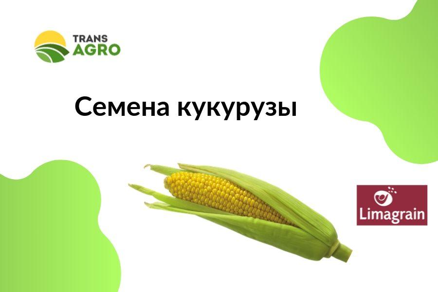 купить семена кукурузы Limagrain (Лимагрейн)