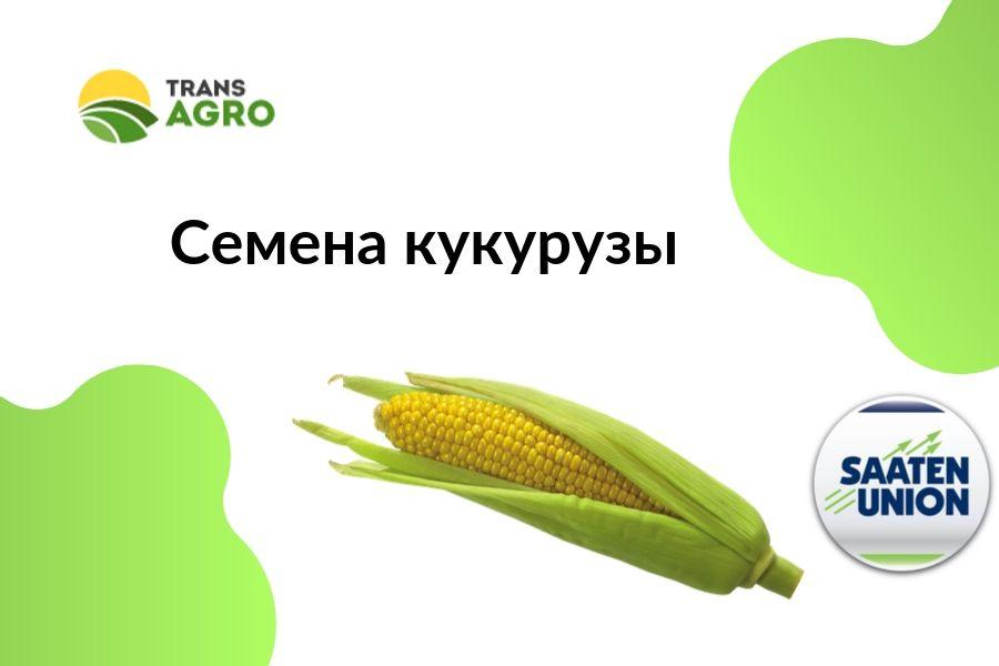 купить семена кукурузы SAATEN-UNION