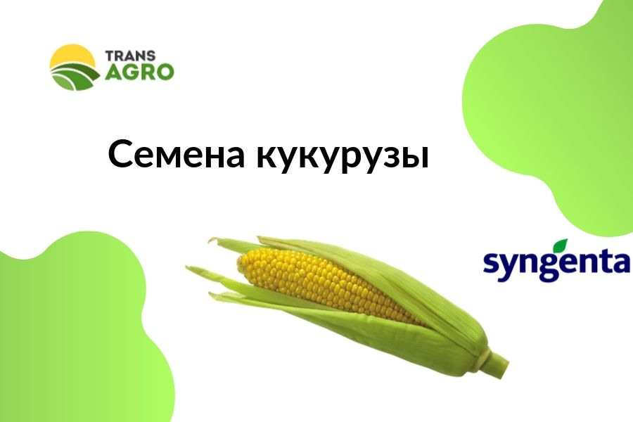 купить семена кукурузы Syngenta (Сингента)