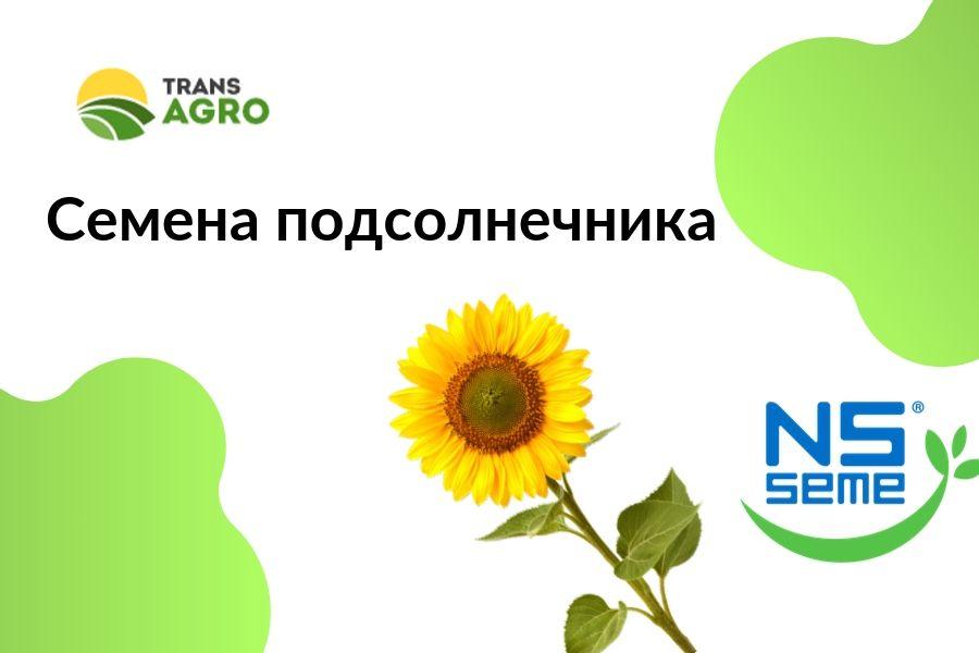 купить семена подсолнечника NS SEME