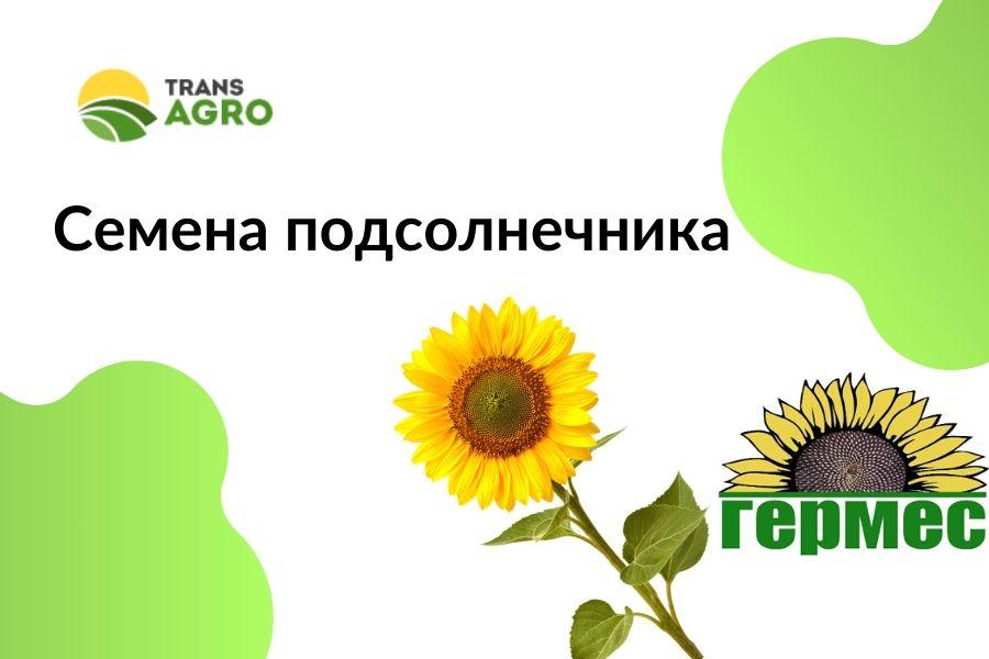 купить семена подсолнечника ТД Гермес
