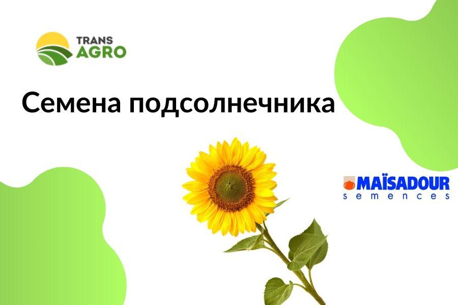 купить семена подсолнечника Maisadour (Майсадур)