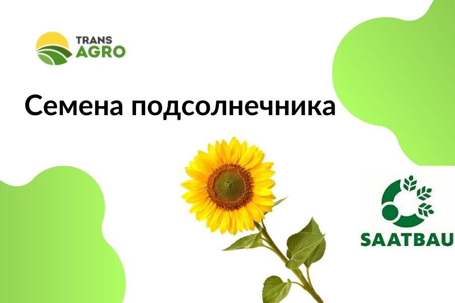 купить семена подсолнечника saatbau-zaatbau
