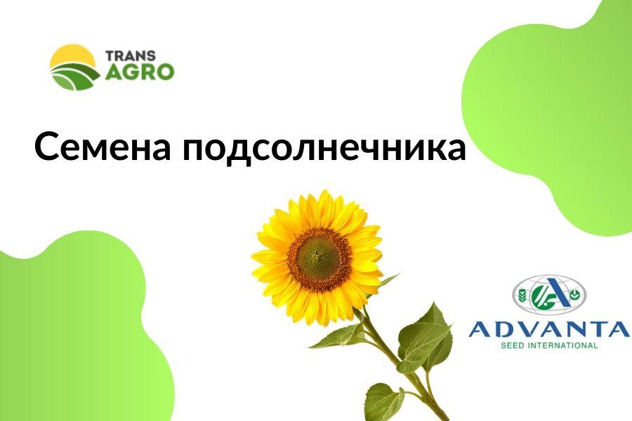 купить семена подсолнечника Адванта (Alta Seeds)