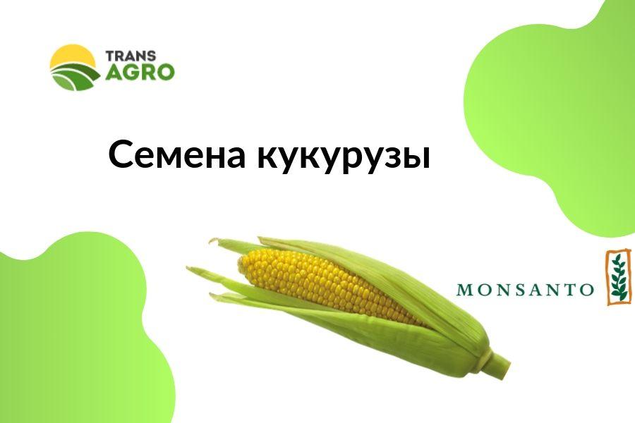 купить семена кукурузы Monsanto (Монсанто)