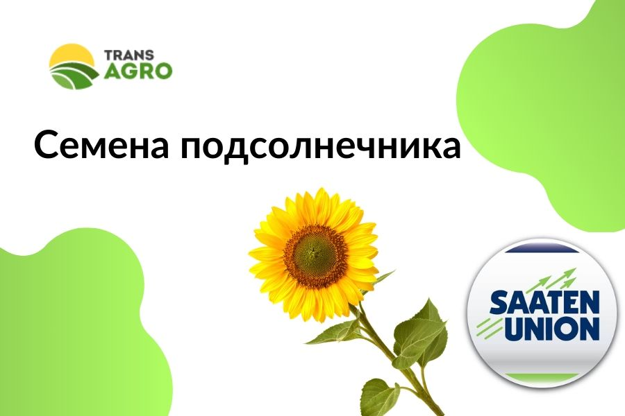 купить семена подсолнечника SAATEN-UNION