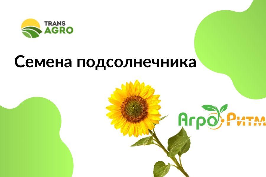купить семена подсолнечника НВП АгроРитм
