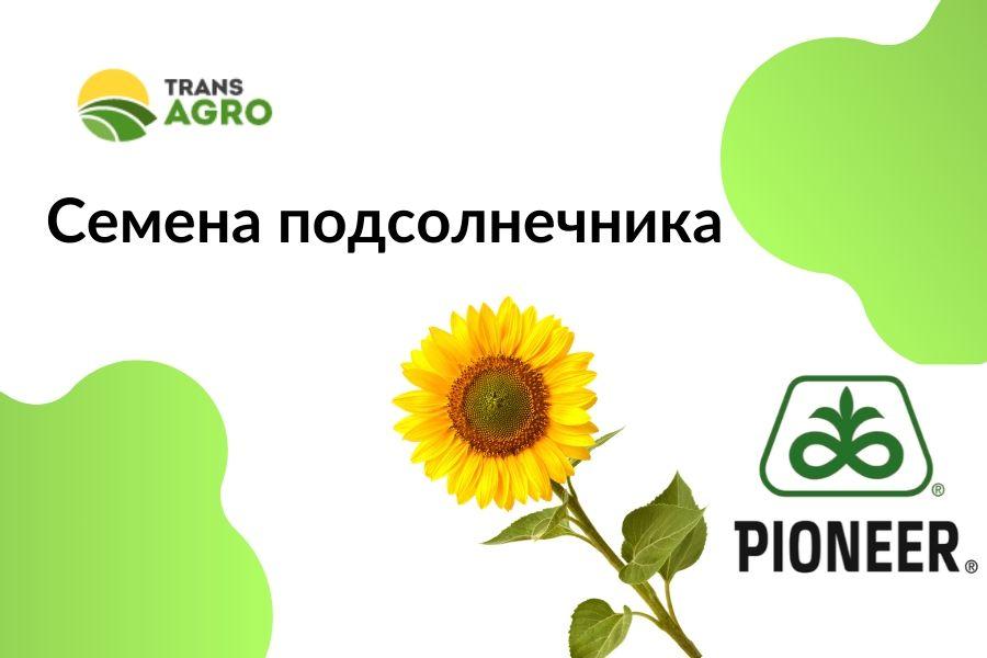 купить семена подсолнечника Pioneer (Пионер)