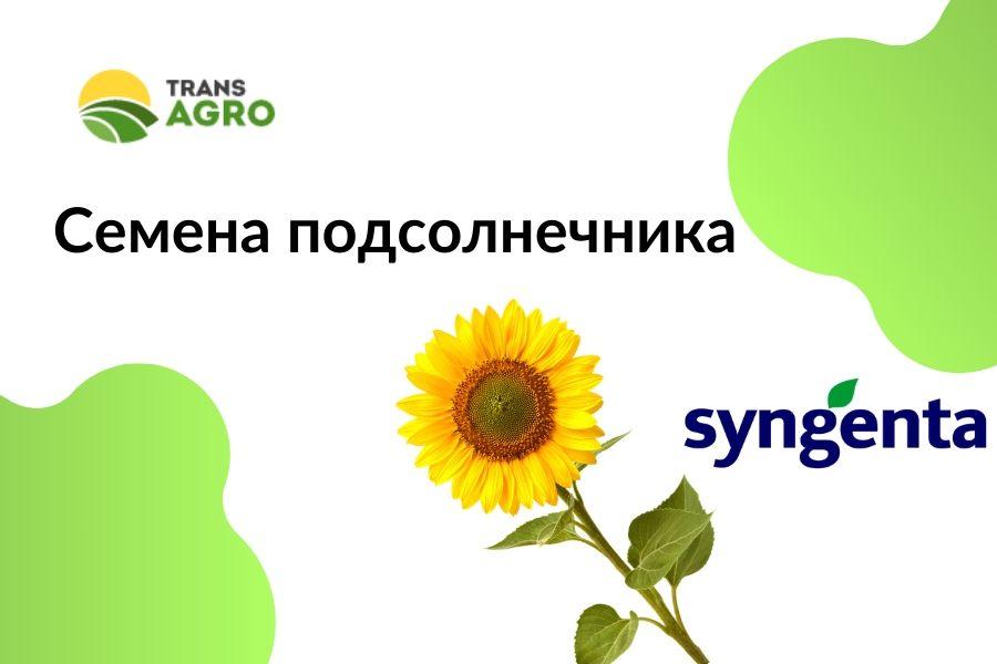 купить семена подсолнечника Syngenta (Сингента)
