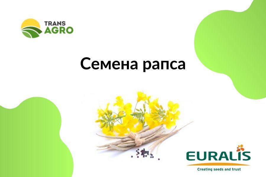 купить семена рапса евралис (euralis)