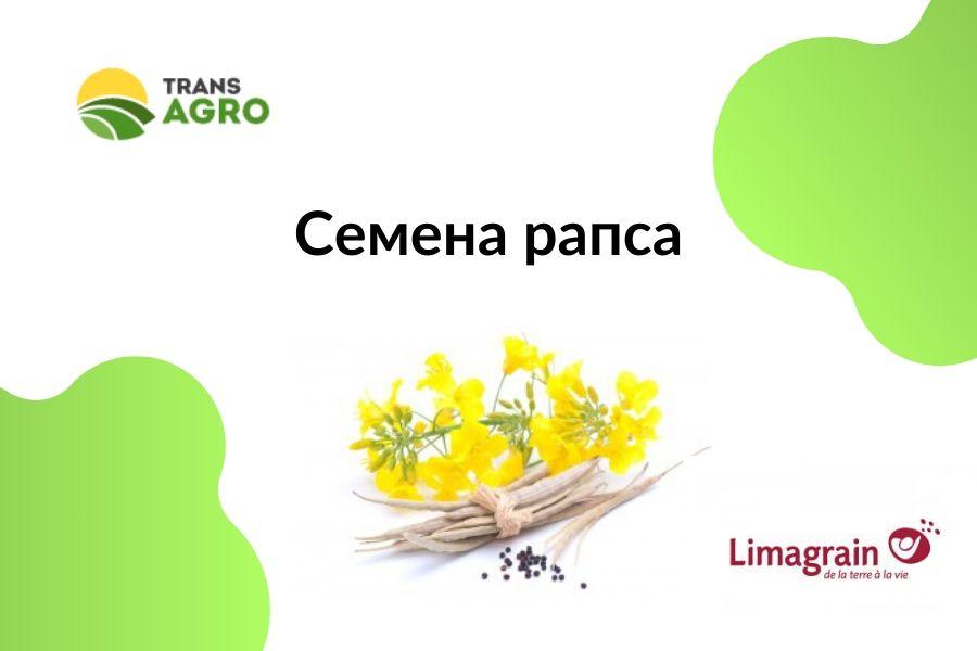 купить семена рапса Лимагрейн (limagrein)