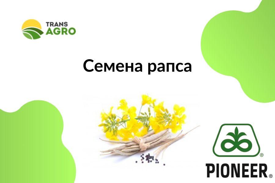 купить семена рапса пионер