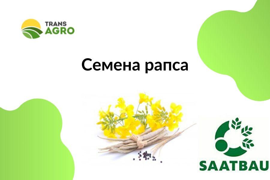 купить семена рапса Saatbau (ЗаатбаУ)