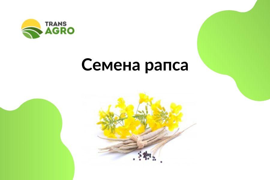 купить семена рапса