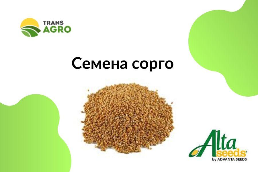 купить семена сорго зерновое Alta Seeds (Адванта)