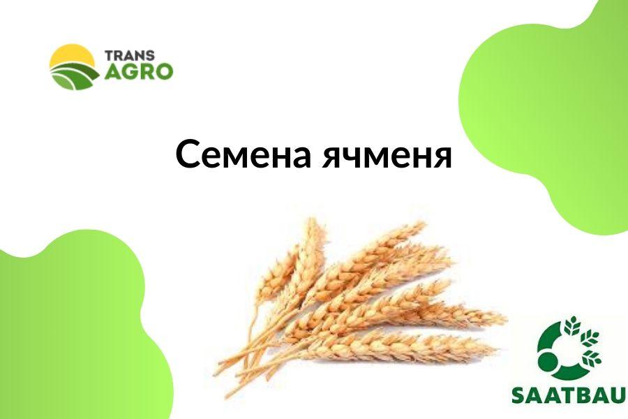 купить семена ярового ячменя ЗААТБАУ (SAATBAU)
