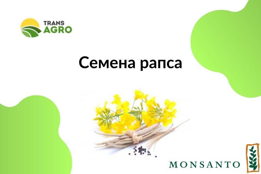 купить семена рапса Монсанто (Monsanto)