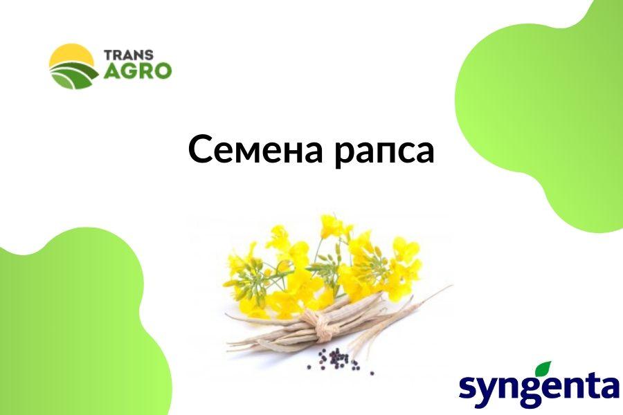 купить семена озимого рапса сигента
