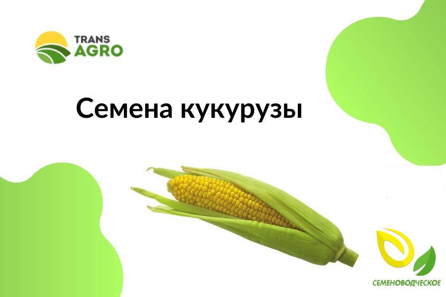 купить семена кукурузы семеноводческое