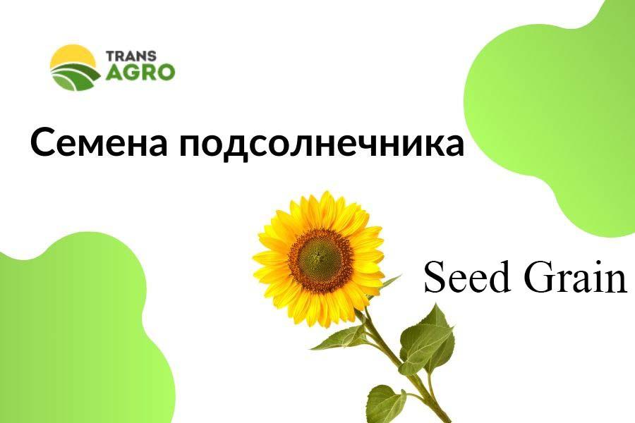 купить семена подсолнечника Seed Grain (Сид Греин)