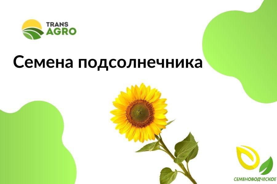 купить семена подсолнечника Семеноводческое