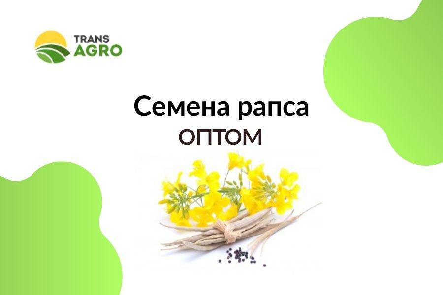 купить семена рапса оптом