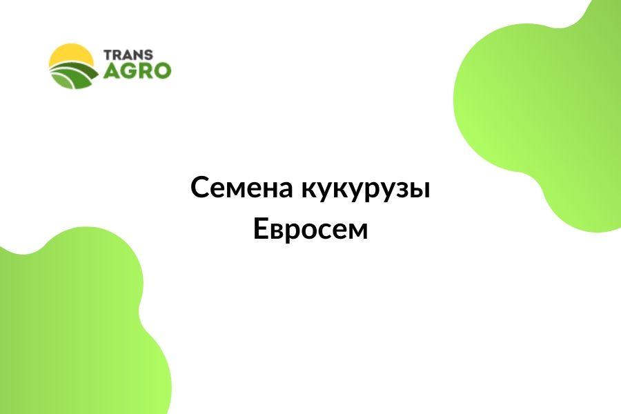 купить семена кукурузы Евросем