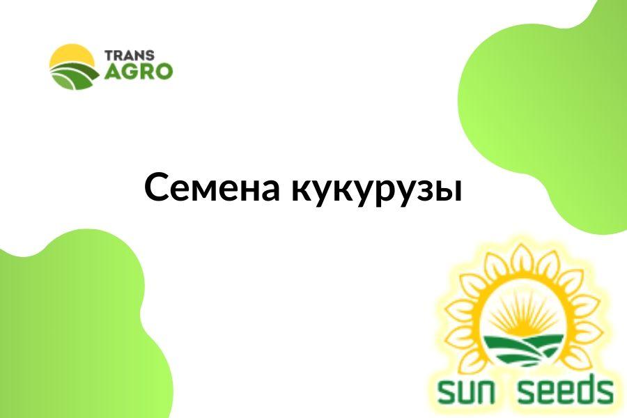 купить семена кукурузы SunSeeds (Сан Сидс)