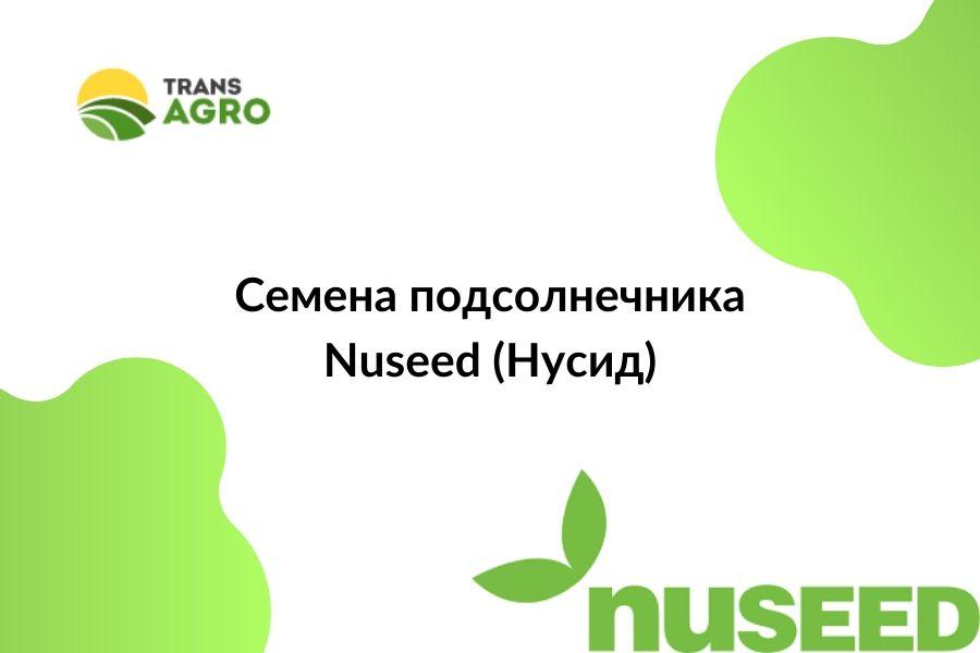 купить семена подсолнечника Nuseed