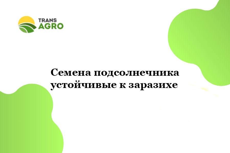 купить Семена подсолнечника устойчивые к заразихе