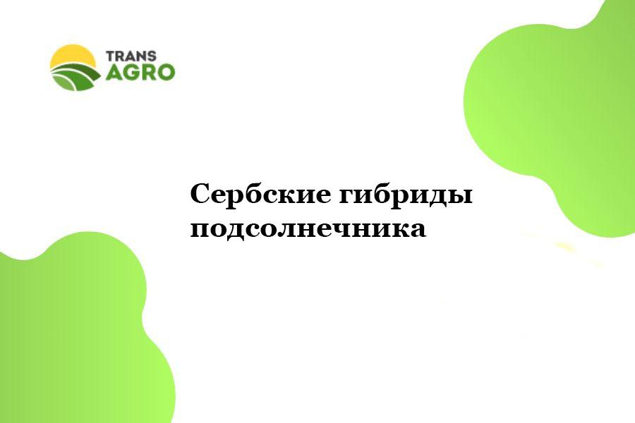 купить Сербские гибриды подсолнечника