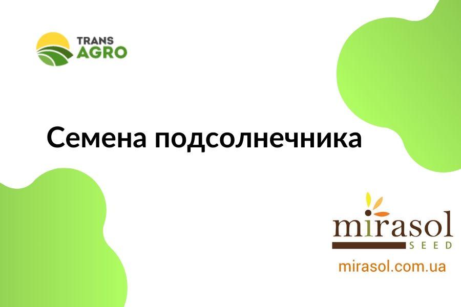 купить семена подсолнечника Mirasol Seed (Мирасол Сид)