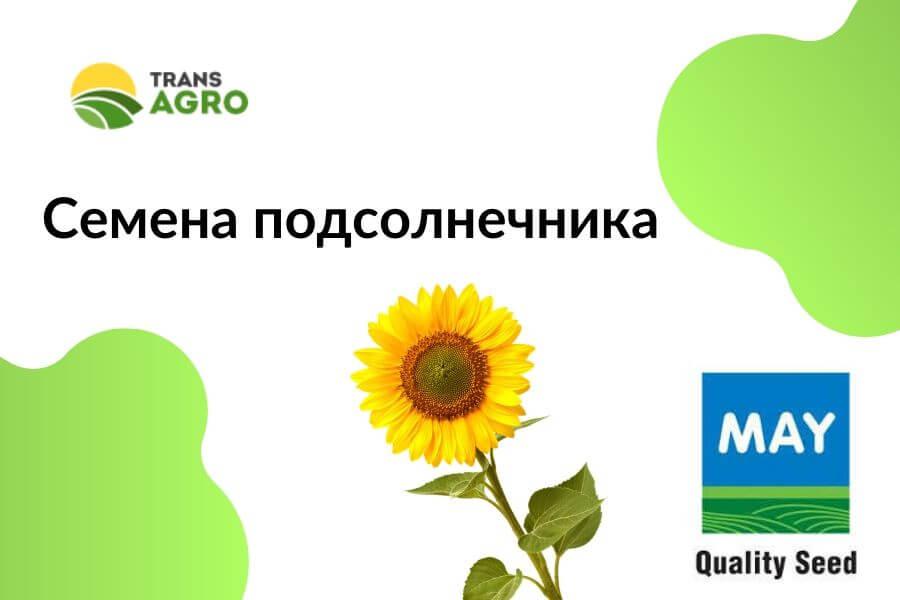 купить семена подсолнечника mayseed