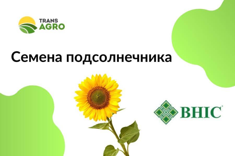 купить семена подсолнечника Внис