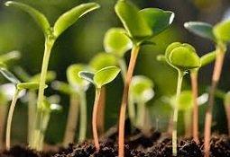 купить стимуляторы роста